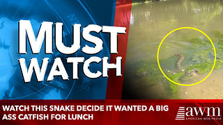 Watch this snake decide it wanted a big ass catfish for lunch