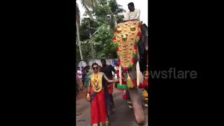 Abuse outcry after stylish bride leads elephant procession - Video