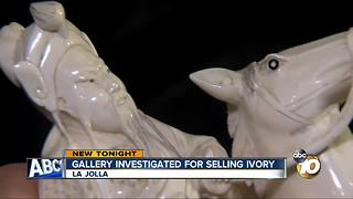 Gallery investigated for selling ivory
