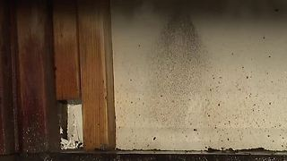 Las Vegas condo deemed unlivable after major water damage found - Video