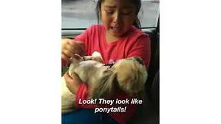 Heartbroken Girl Cries Over Dog's New Haircut - Video