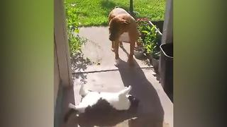 Cat Won't Let The Dog Pass - Video