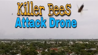 Angry Bees Attack Drone in Flight - Video
