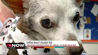Amazing adventures of local 17-year-old pup - Video