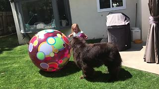 Little girl makes backyard obstacle course for her dog - Video