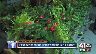 First day of spring means working in the garden - Video