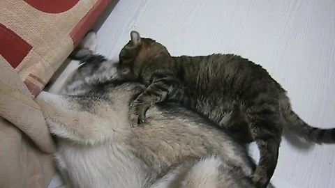 Affectionate Cat Is Completely Obsessed With Doggy Best Friend