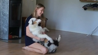 Australian Shepherd puppy dogtraining trustfall  - Video
