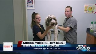 Consumer Reports: Should your pet try CBD?