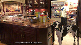 Great Danes help prepare holiday treats