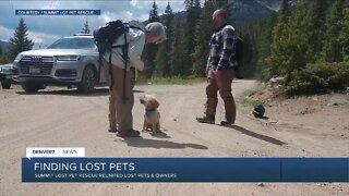 Finding lost pets in Summit County