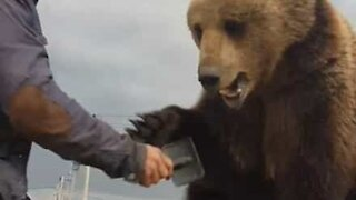 Guy has a brush with a restless bear