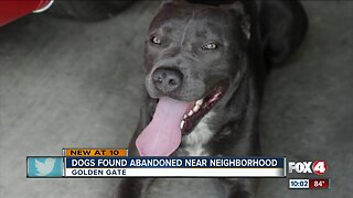 Man rescues abandoned dogs in Golden Gate Estates