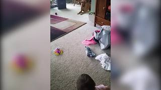 The Cutest Conversation Between A Dog And A Baby Girl - Video
