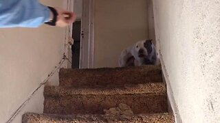 Heartwarming Animal Rescue Sees Adorable Dog Freed From Abandoned House