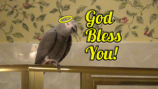 Polite parrot sneezes and says