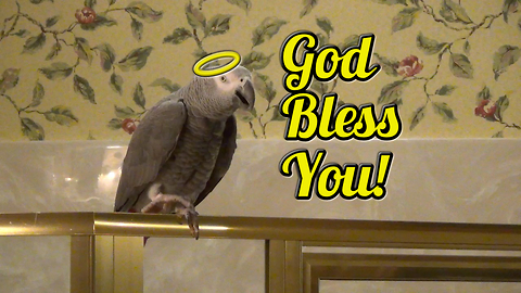 """Polite parrot sneezes and says """"God Bless You!"""""""