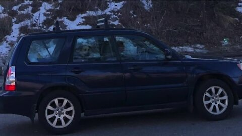 Westminster Police searching for stolen car with 15-year-old dog inside