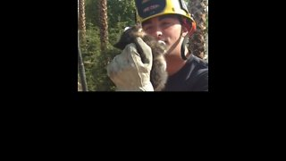 California Firefighters Rescue Kitten Trapped in Air Vent
