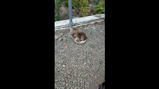 Fluffy kitten is played with stones