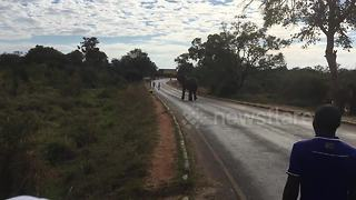 Elephant charges at runner during Victoria Falls Marathon - Video