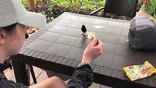 Friendly little bird begs for ice cream from Canadian tourist