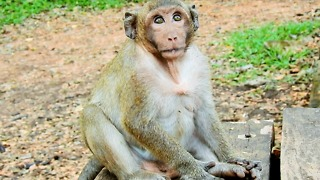 Sweetpea Was Like His Father Donald King Of Monkey - Video