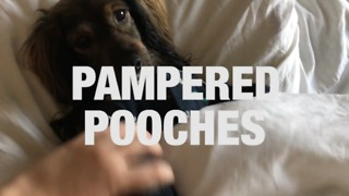 The World's Most Spoiled Pups - Video