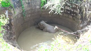 Helpless Baby Elephant Rescued From Well Returns To The Wild - Video