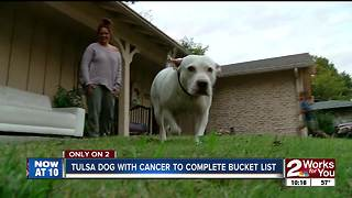 Dog with cancer scratches items off bucket list - Video