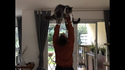 Homegy Fail: using Cats as dumbbells during covid19 self quarantine