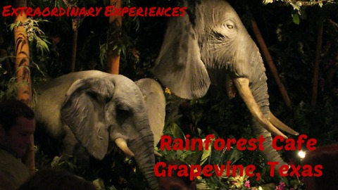 It's a jungle in there | Rainforest Cafe VLOG