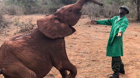 Adorable rescue elephant uses trunk to imitate carer's dance moves