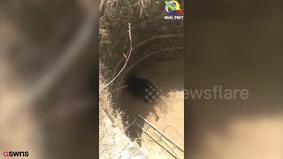 Shocking footage shows sloth bear being rescued from a dry well