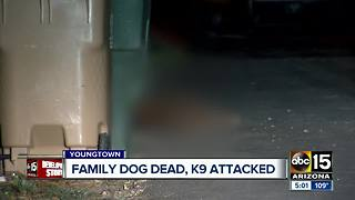 MCSO deputy shoots, kills dog in Youngtown after it allegedly attacks his K9 partner - Video