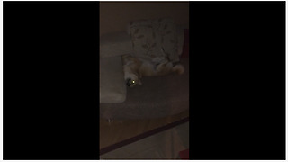 This Dog Likes To Sleep In A Very Strange Position - Video
