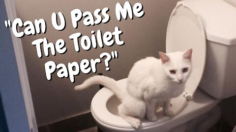 Cat Pees Outside The Litter Box | Funny Cat