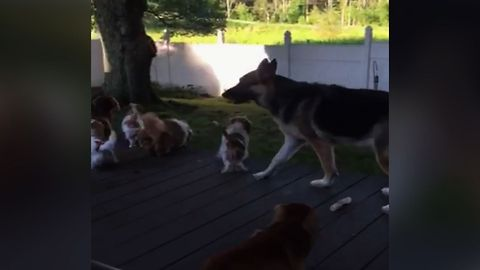 Pack Of Dogs Get Excited By Shadow