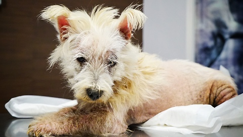 Abandoned dog was ready to die, then something incredible happens