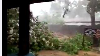 Cyclone Mora Topples Trees in Southeast Bangladesh - Video