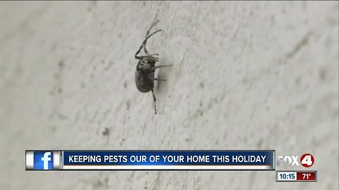 Pests could ruin hol