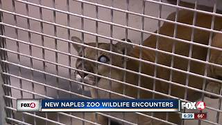 New Naples Zoo Wildlife Encounters - Video