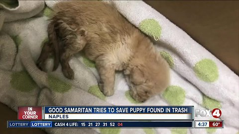 Puppy found abandoned in Trash
