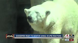 KC zookeepers eager to see how animals behave during solar eclipse - Video