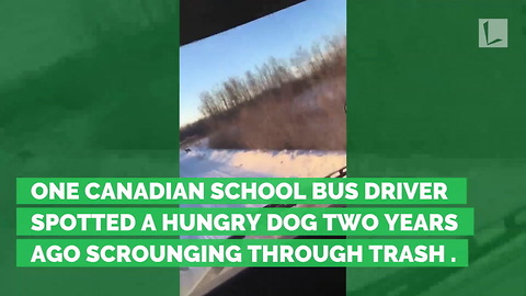 For 2 Years, Bus Driver Has Quietly Fed Stray Dog. Now Dog Sits & Waits Each Day to Greet Her