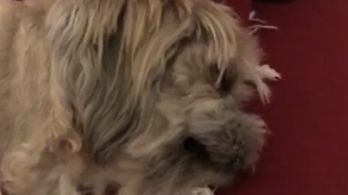 My snoring dog  - Video