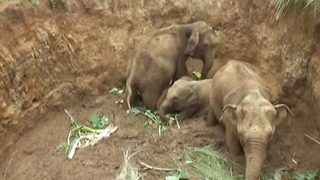 Dramatic Rescue Of Four Elephant Calves From A Deep Agro-Well In Sri Lanka - Video