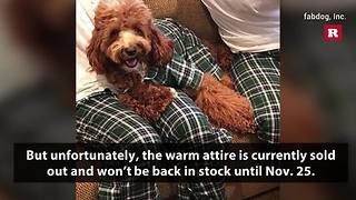 Pet owners can now have matching pajamas with their dogs | Rare Animals - Video