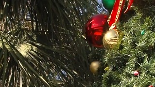 Tree lighting festival in Palm Beach Gardens - Video