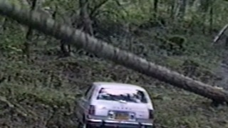 Tree Falls On Parked Car - Video